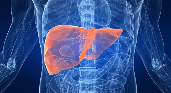 liver with gallbladder