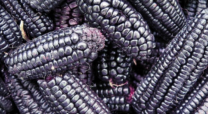 purple corn-min
