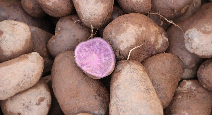 purple potatoes-min