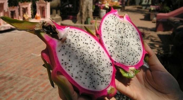 dragon fruit in hand