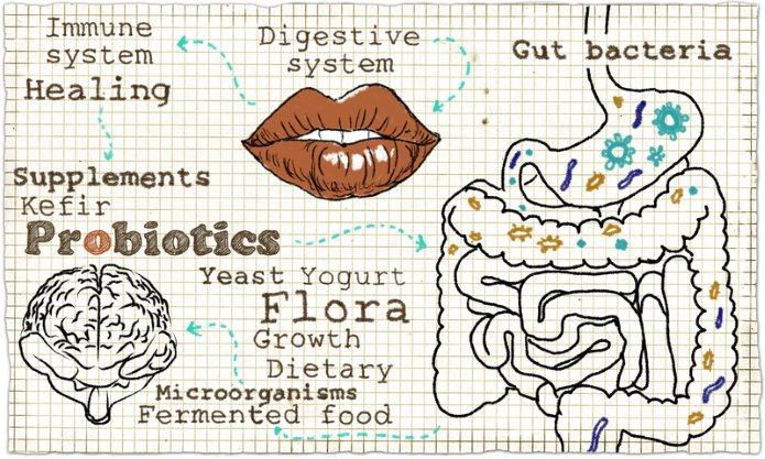 effects of probiotics