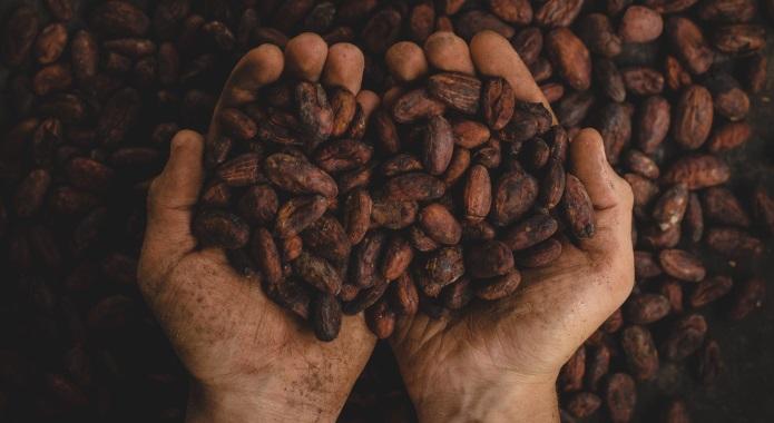 cocoa seeds desktop