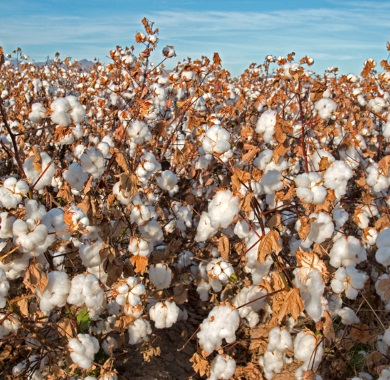 cotton plant mobile