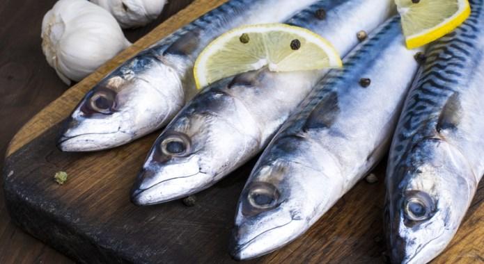 mackarel fish
