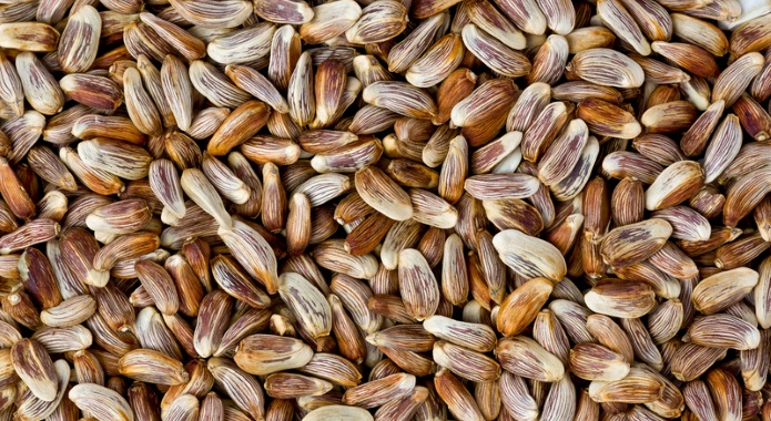 safflower seeds desktop