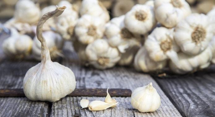 garlic-min