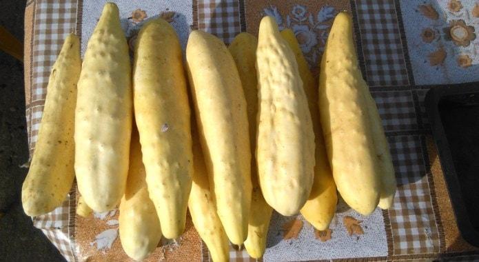 pale-cucumbers-min