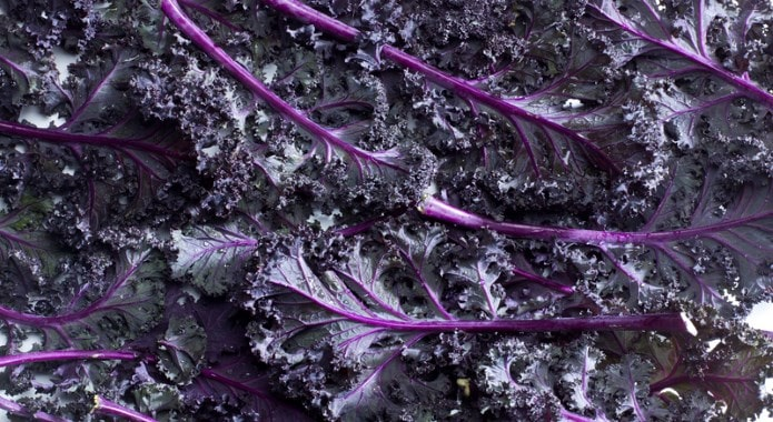 purple kale-min