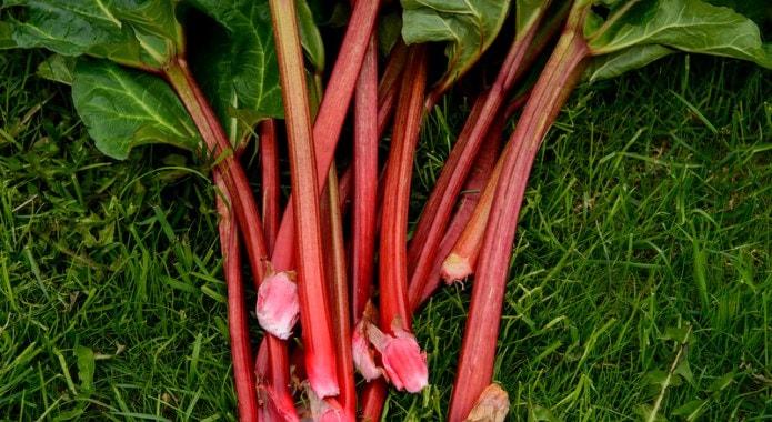 rhubarb-min