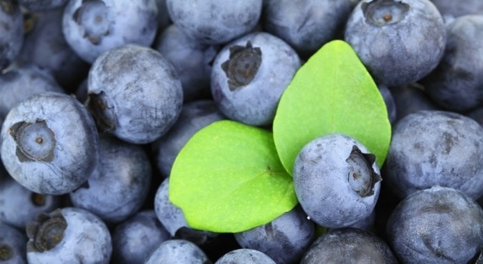 tasty-blueberries-min