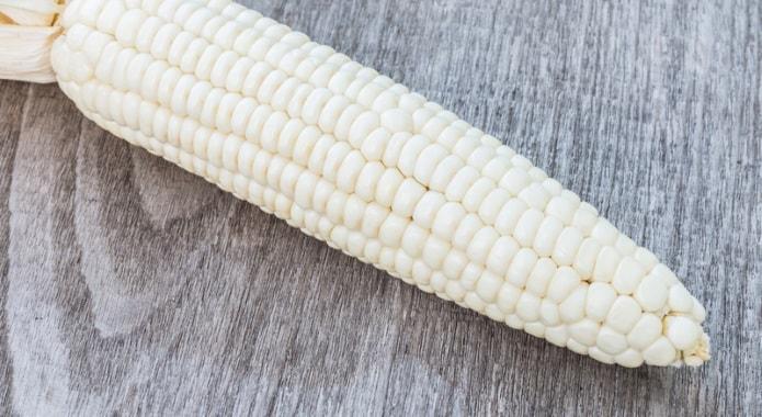white corn-min