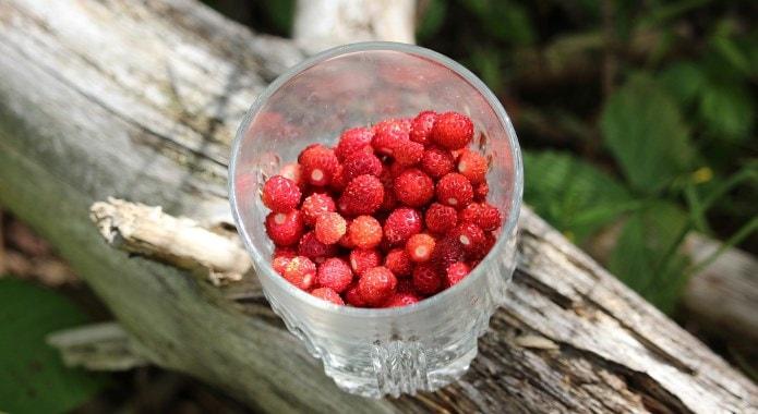 wild-strawberries-mobile-min