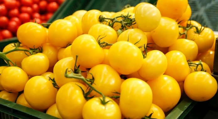 yellow tomatoes-min
